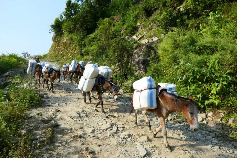 Nepal, Manaslu, Tsum Valley, Trekking, Wandern, Himalaya, Mülis